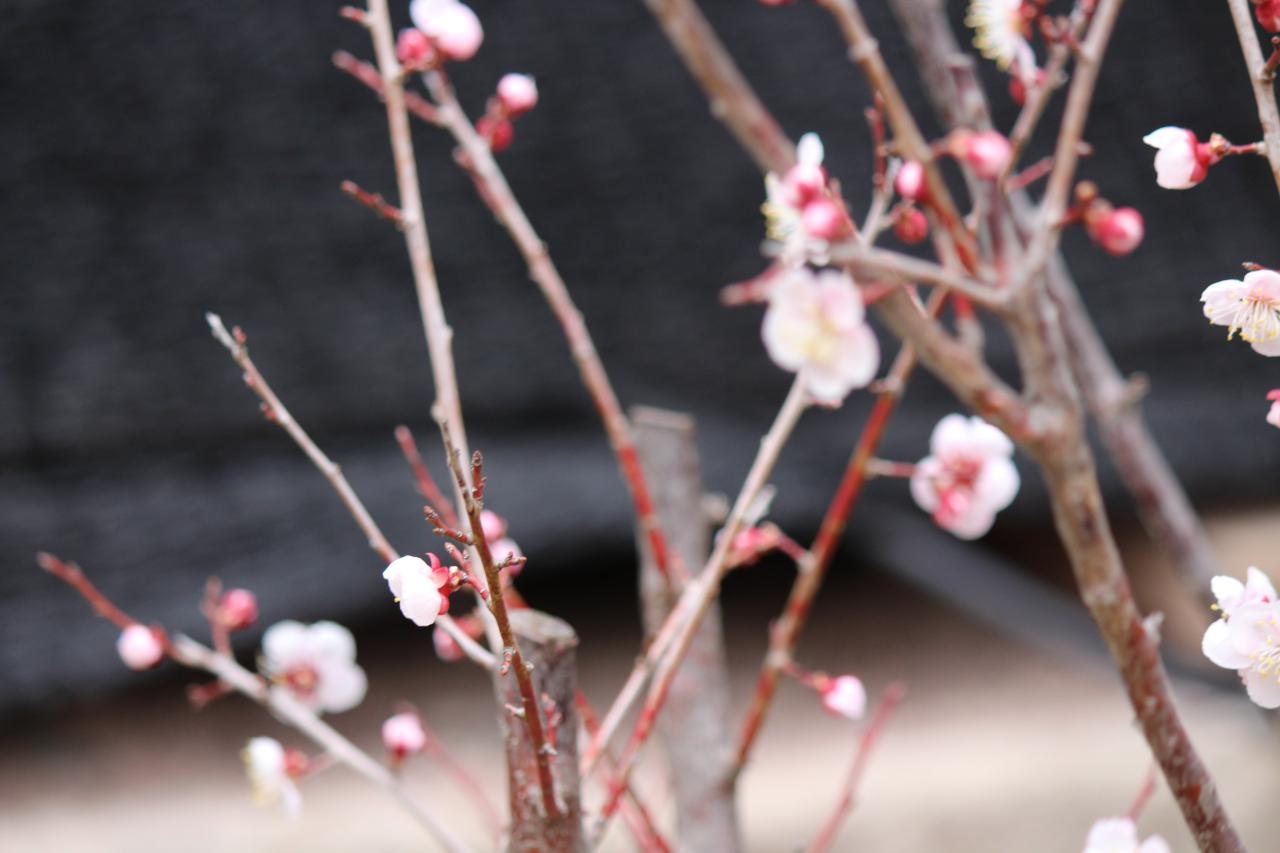 photo_2019-04-10_14-46-11.jpg