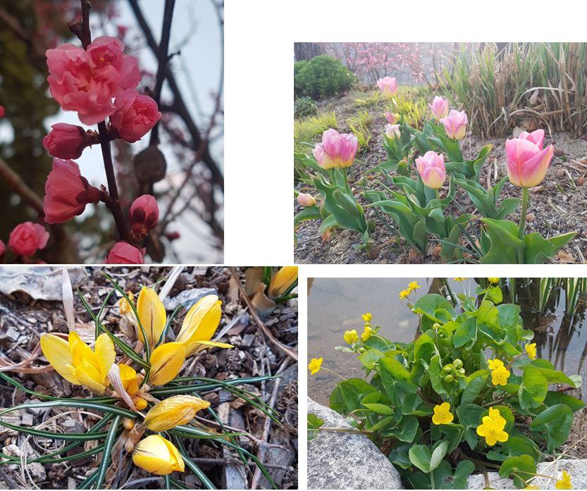 봄꽃 2.JPG