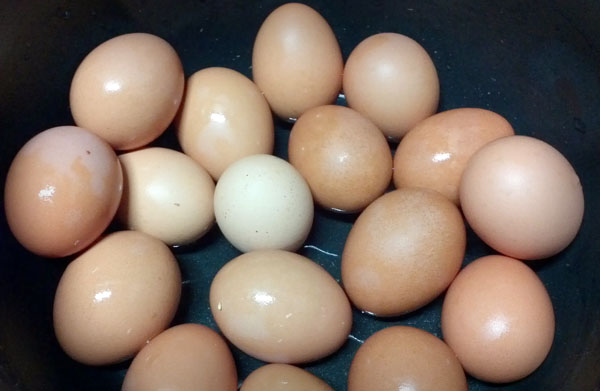 차달걀01.jpg