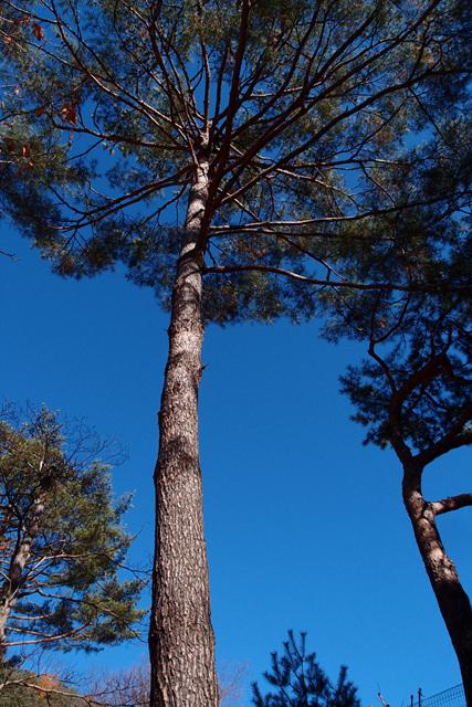 푸른하늘 (3).jpg