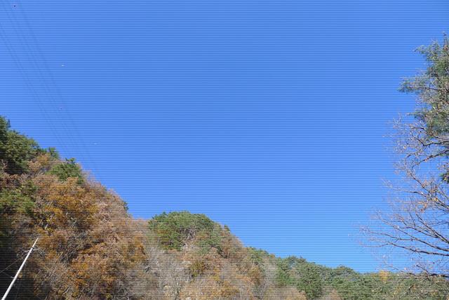 느티나무 (2).jpg