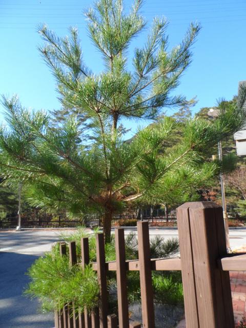 멋진나무 (2).jpg
