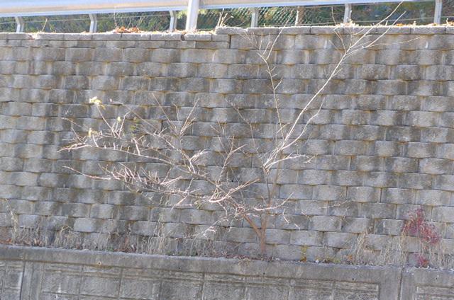 느티나무 (3).jpg