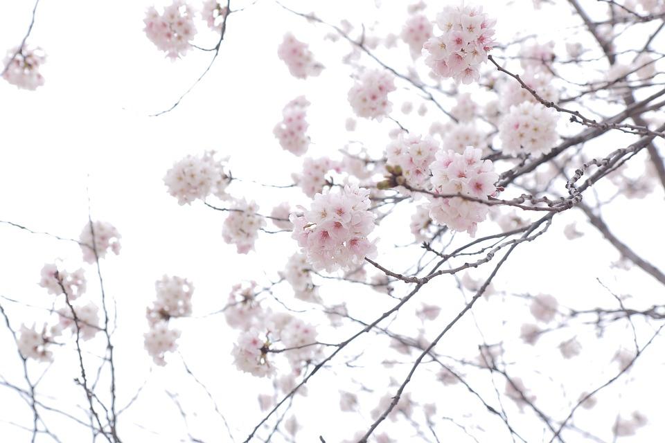 flower-4031193_960_720.jpg